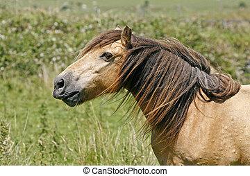 Horse in Bodmin Moor, Cornwall, UK