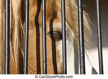 Sad horse in captivity