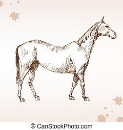 Horse in competition, ink, drawing horse