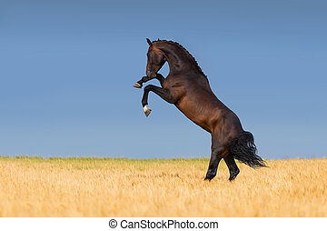 Horse in corn field