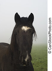 Horse in fog.