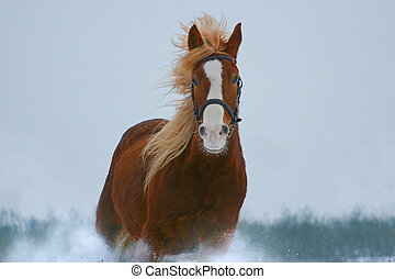horse in gallop - horse portrait in gallop