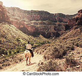 Horse in Grand Canyon