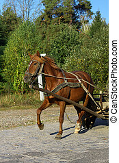 Horse in harness on a country road