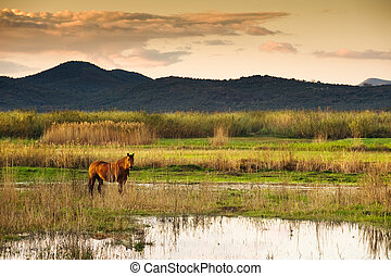 Horse in landscape - Lone horse in a serene swampy landscape...