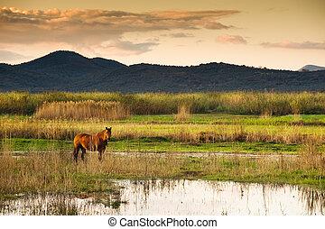 Horse in landscape - Lone horse in a serene swampy...