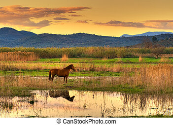 Horse in landscape - Lone horse in a spectacular late ...