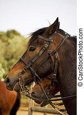 horse in Maremma, Tuscany