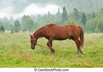 horse in morning