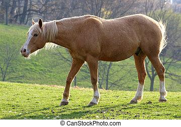 Horse In Morning Sun