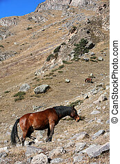 horse in mountains
