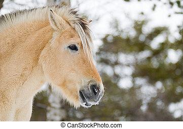 Horse in Norway