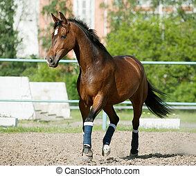 horse in paddock