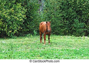Horse in pasture