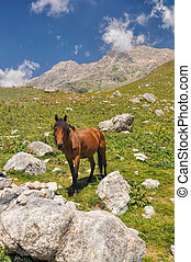 Kyrgyzstan - Horse in scenic mountain range in Kyrgyzstan