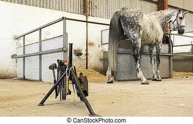 Horse in stable with farrier stand and tools