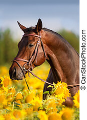 Horse in sunflower - Bay horse in bridle in sunflowers