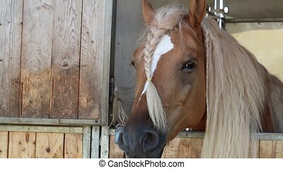 horse in the barn
