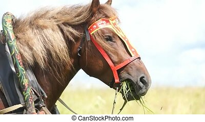 Horse in the field, Country horse