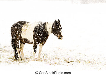 Horse in the field during the snow storm.