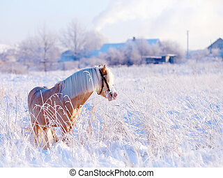 Horse in the field in rural areas. - Beige pony in the field...