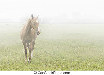 Horse in the mist - Light-chestnut horse standing in thick ...