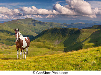 Horse in the mountains at summer