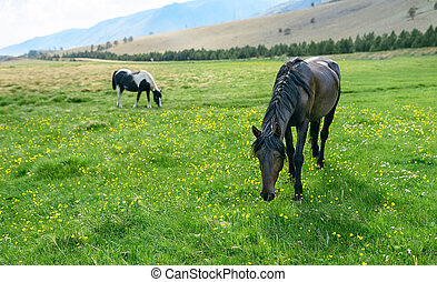 horse in the nature reserve of Lake Baikal