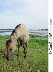 Horse in the open field