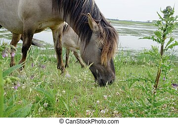 Horse in the open field