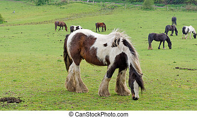 Horse in the pasture.
