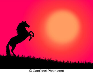 Horse in the sunset