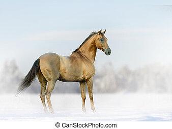 horse in winter fog
