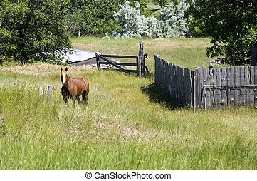Horse in Wyoming