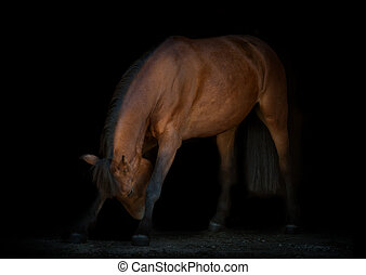 horse is making reverence, black background