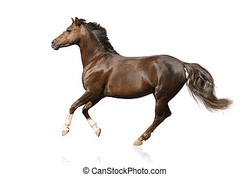 horse isolated galloping
