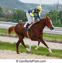 Horse jockey running at race.