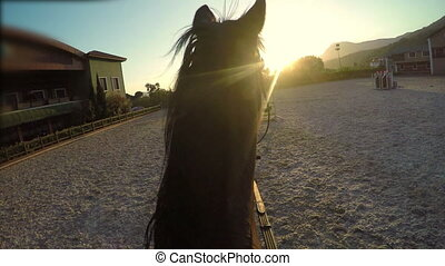 """Horse jumping hurdle at sunset, gopro point of view"""