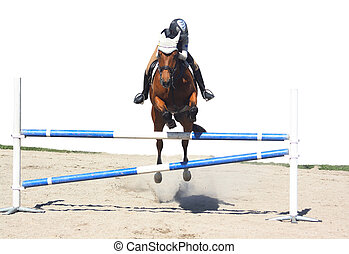 Horse jumping, isolated