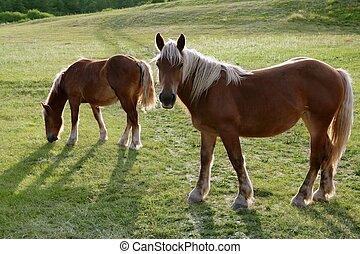 Horse landscape in green meadow Pyrenees - Horse landscape ...