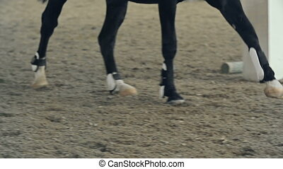 Horse Leg Wraps - Macro shot of horse limbs during her trot