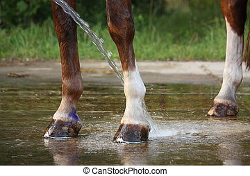 Horse legs being washed with water from hose in summer
