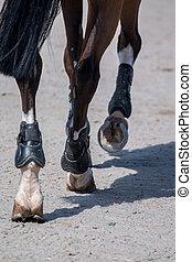 Jumping horse legs walking on dirt ground.