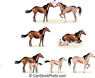 Horse Life with all stages including birth mother and foal...