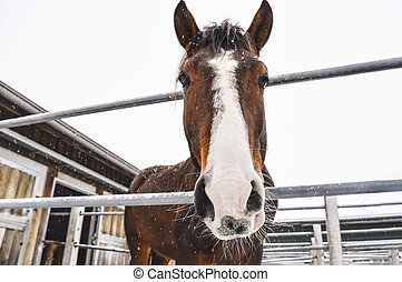 Horse looking at camera while snowing