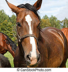 Horse looks at the camera