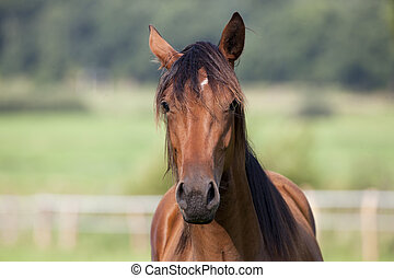 Horse looks to the camera