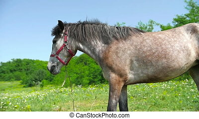 Horse Mane Waving - Horse mane waving in a meadow
