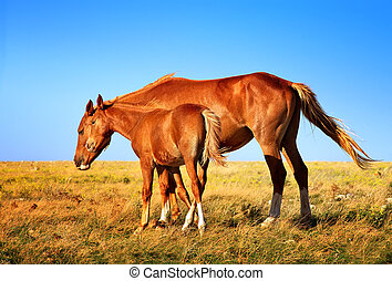 Horse Mare with Foal mother and baby Farm Animal on field ...