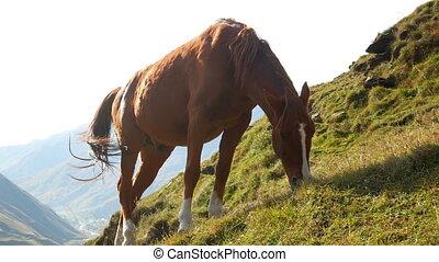 Horse mountains animal - Horse sunset animal mountain eat